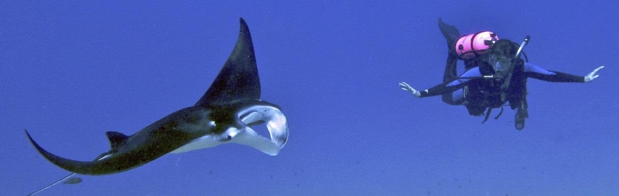 Underwater Herald